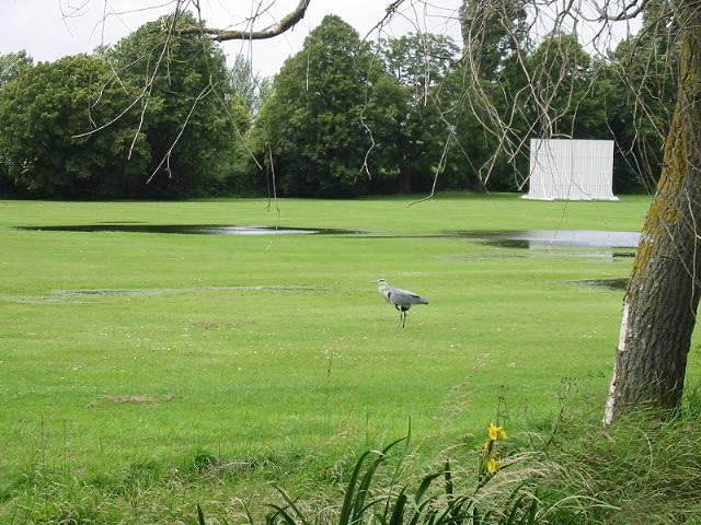 Waterlogged cricket pitch