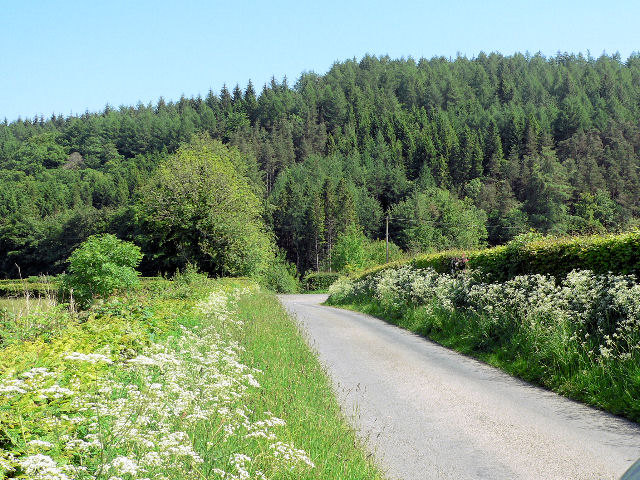 Attractively untamed road verges