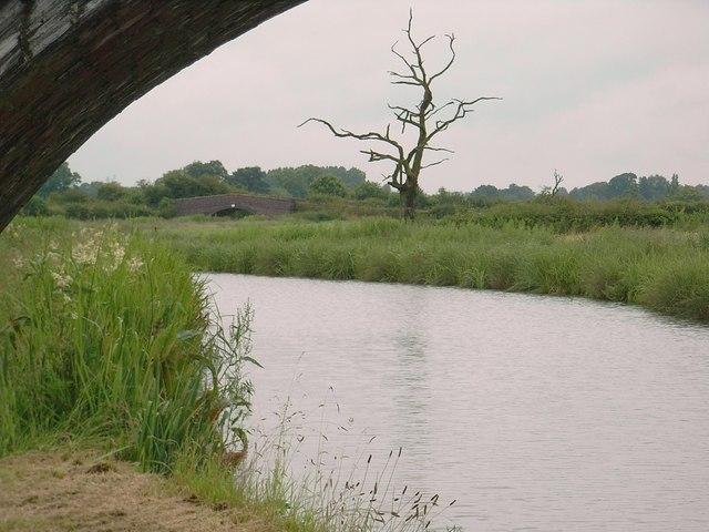 Bridge 49