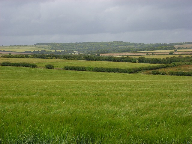 Barley fields, Nether Wallop