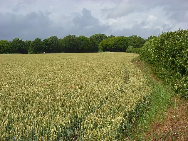 Farmland, Nether Wallop