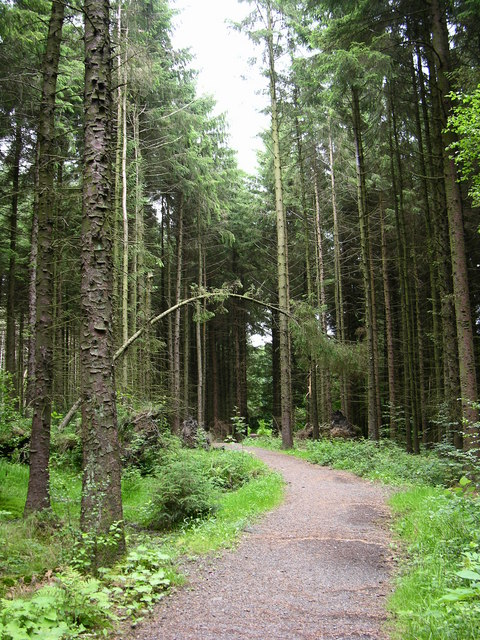 Forest Path, Turton and Entwistle Reservoir