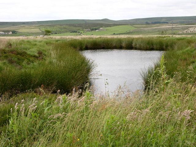 Pond, Cranberry Moss