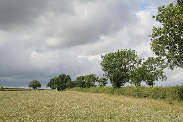 Hedgerow along Woodhouse Field Lane