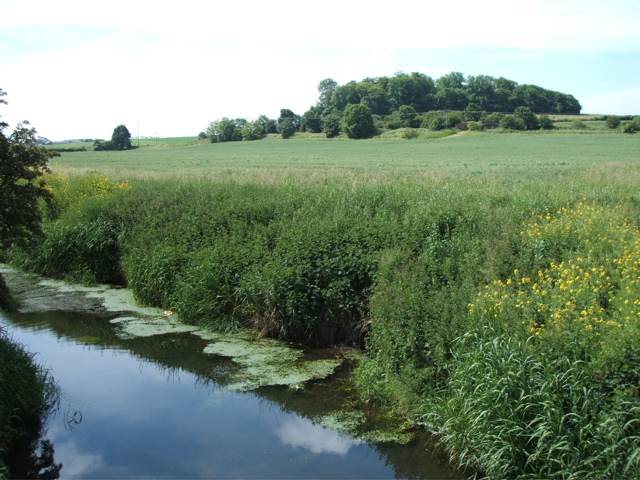 Looking across from the dyke bridge to Brockholes Wood