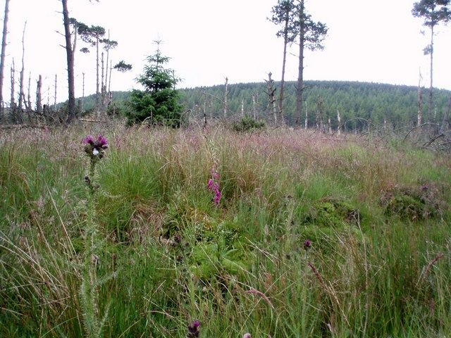 Wild flowers in forestry clear fell