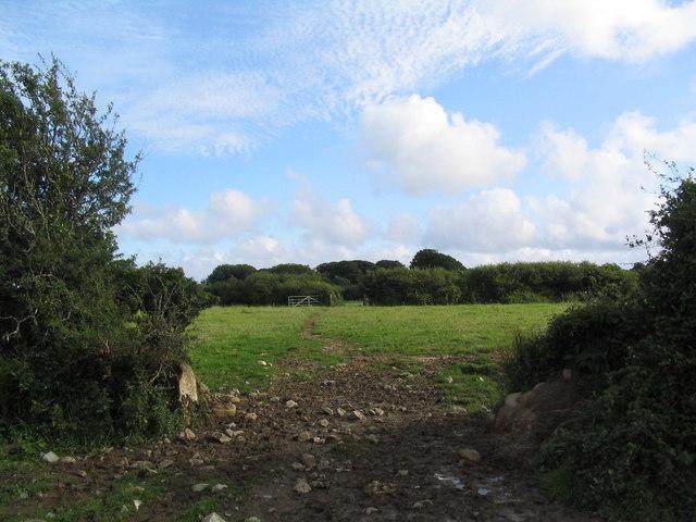 Footpath towards the coast near Coverack