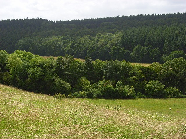 Down and forest, Pitton