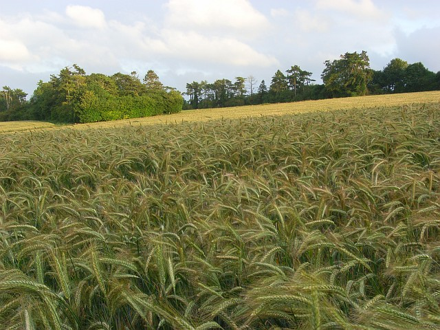 Farmland, Firsdown