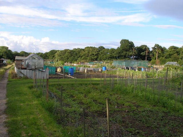 Quarry Road allotments