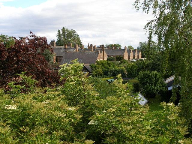 The rear gardens of Albert Road