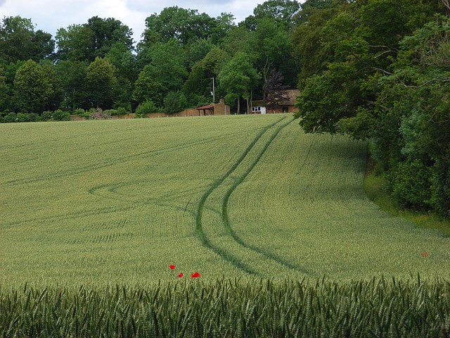 Farmland, Newton Tony