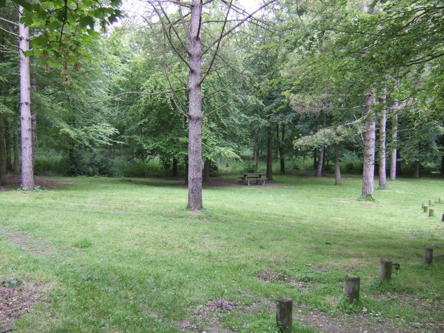 Picnic area in the woods