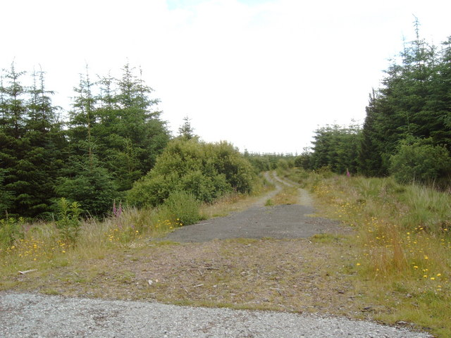Forestry Road into Laurieston Forest