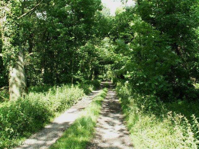 Track through deciduous wood at Wragmire
