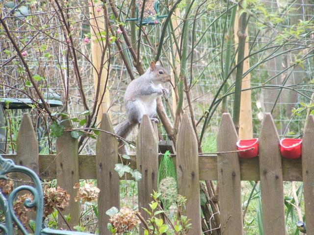 Sid squirrel's breakfast at Holme-Dene