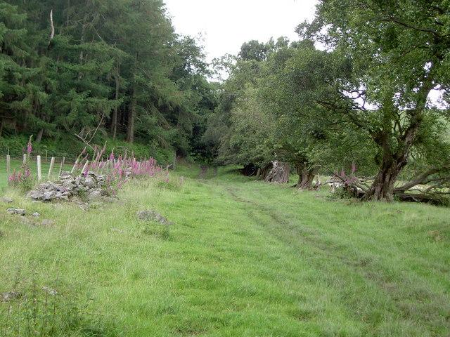 Bridleway near Moel Famau