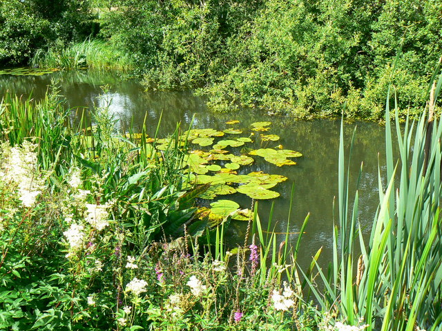 Thames and Severn canal, near South Cerney (1)