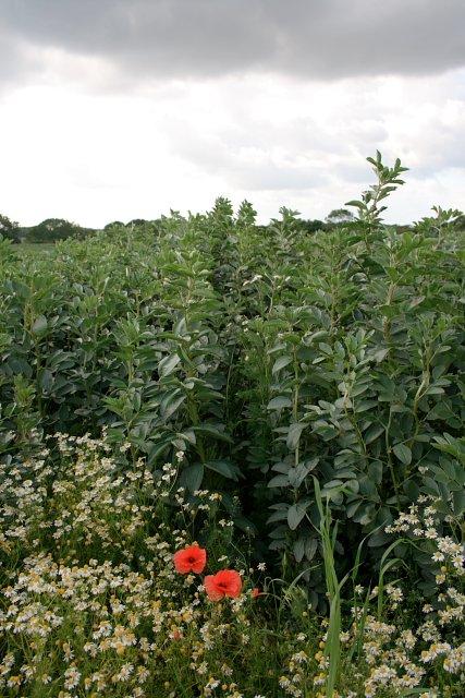 Arable Field Near Dunsdale Farm