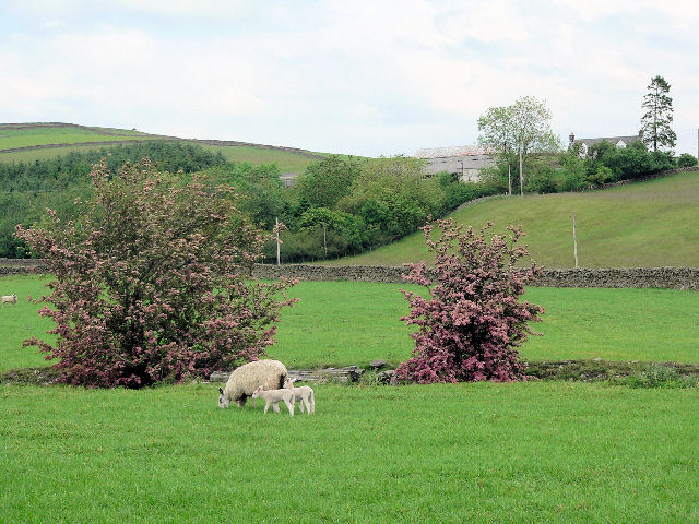 Grazing land at Auchenage
