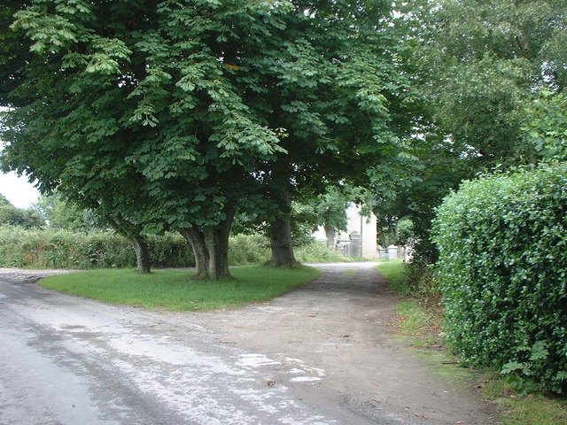 Horse Chestnut trees at the entrance to Ballavarry