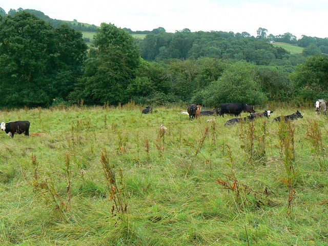 Cattle in a field near Breach