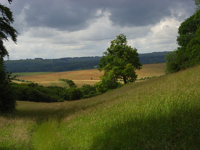 Woodland edge, Barford Down