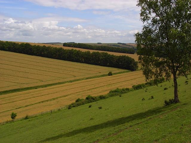 Down and farmland, Great Wishford