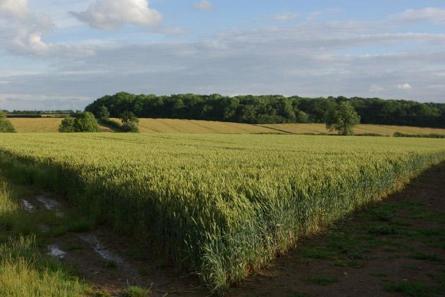 Farmland near Upper Benefield
