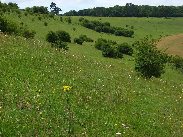 Downland, Great Wishford