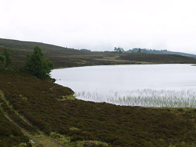 East bank of Lochan Oisinneach