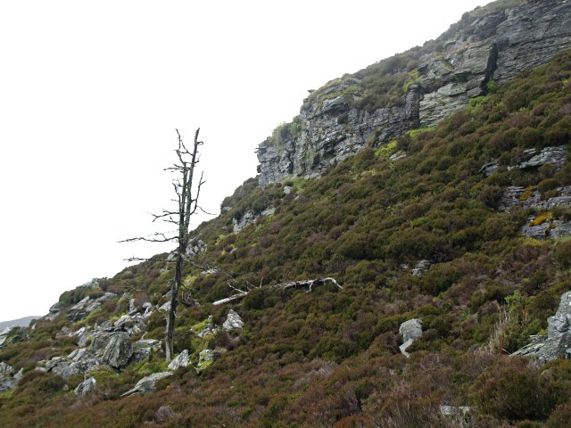 Dead larch and crag, Creag Gharbh
