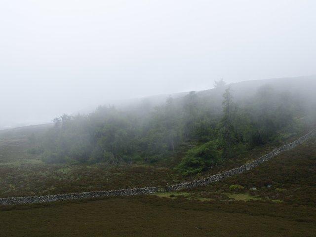 Misty larches,  Creag Gharbh