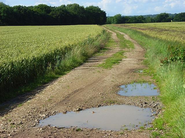 Track through wheat, Penton Mewsey