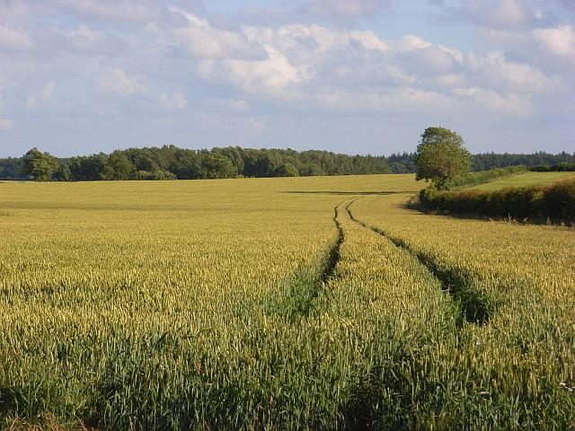 Wheat, Monxton