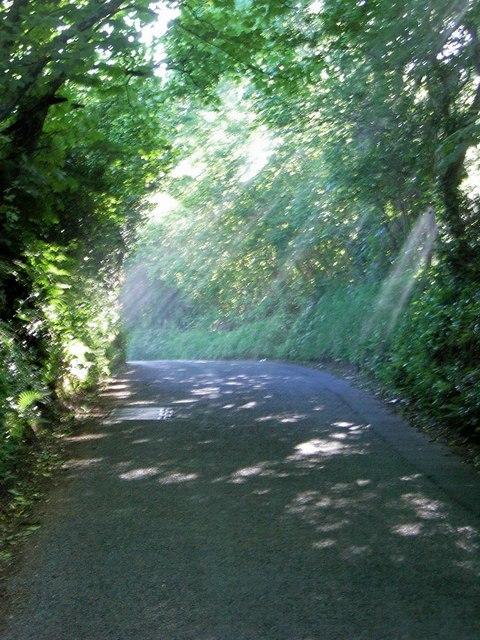 Sunlight penetrates the lane.