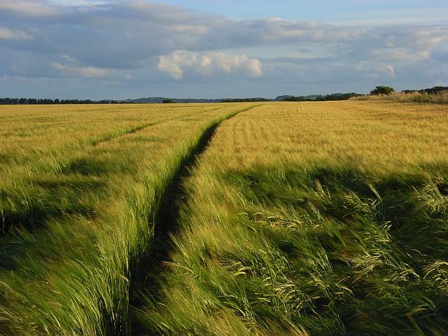 Farmland near Middle Wallop