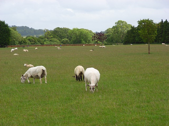 Pastures, Nether Wallop