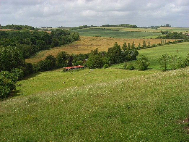 Downland, Pitton