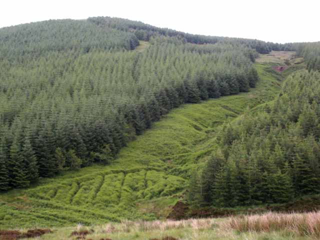 The forested slopes of Cnoc nan Gabhar