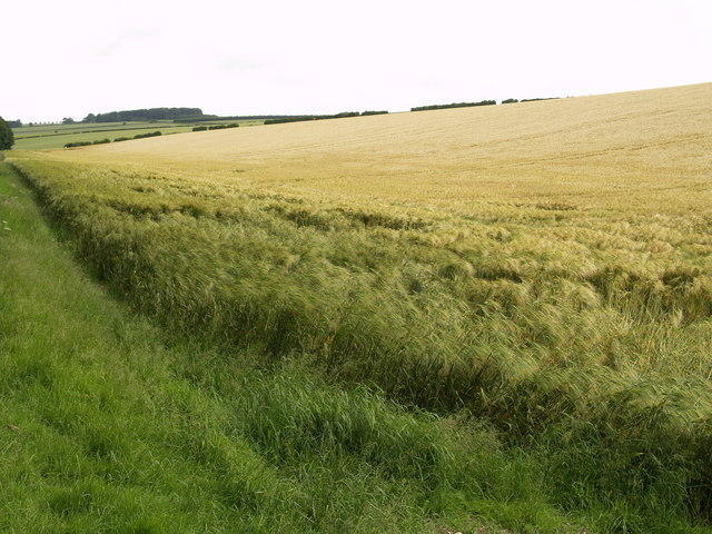 Wolds' Barley Field