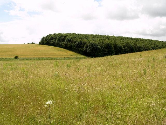 Cowdale Plantation