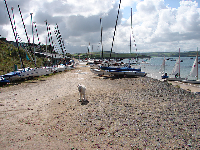 Sailing dinghies at Rock - and a friendly dog