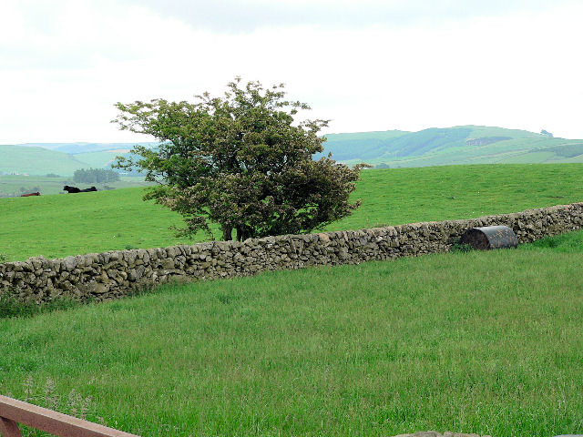 Wall enclosed fields