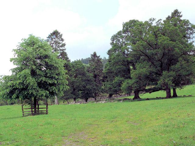 Parkland landscape