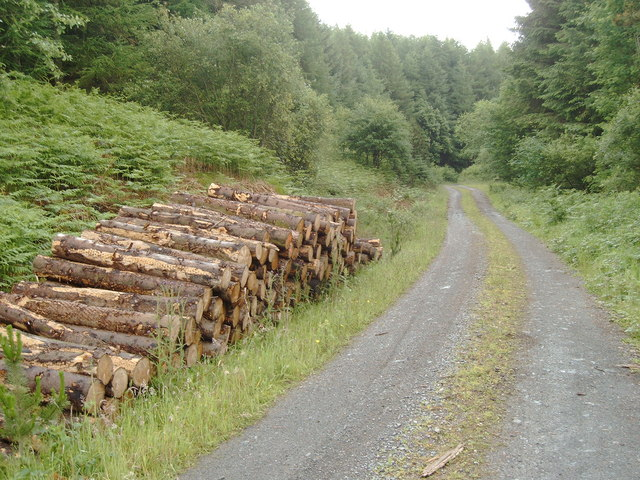 Logs by a forestry road in Laurieston forest