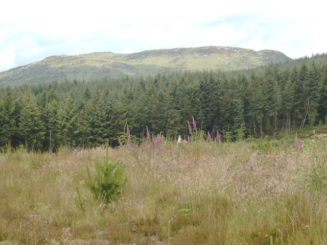 Looking toward Airie Hill from a clearing in Laurieston Forest