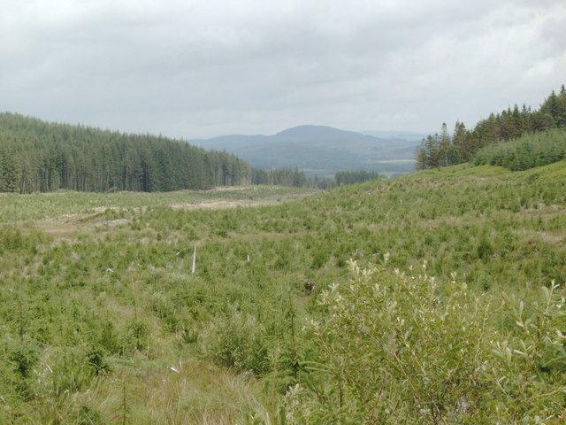 Mochrum Fell in the distance, from Laurieston Forest