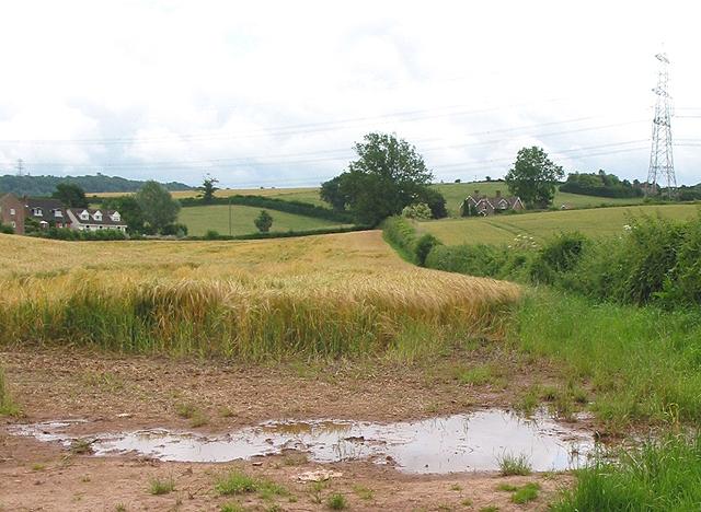 Barley crop near Pontshill