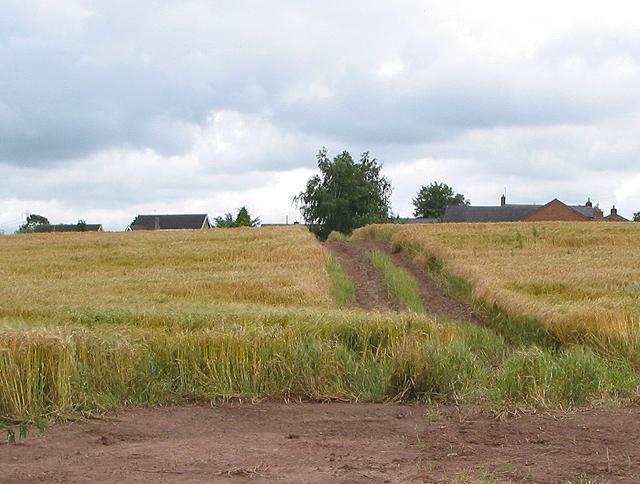 Farm track through ripening barley